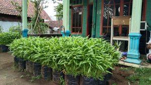 Tanaman organik hasil panen warga Kampung Baran, BuringKampung Buring